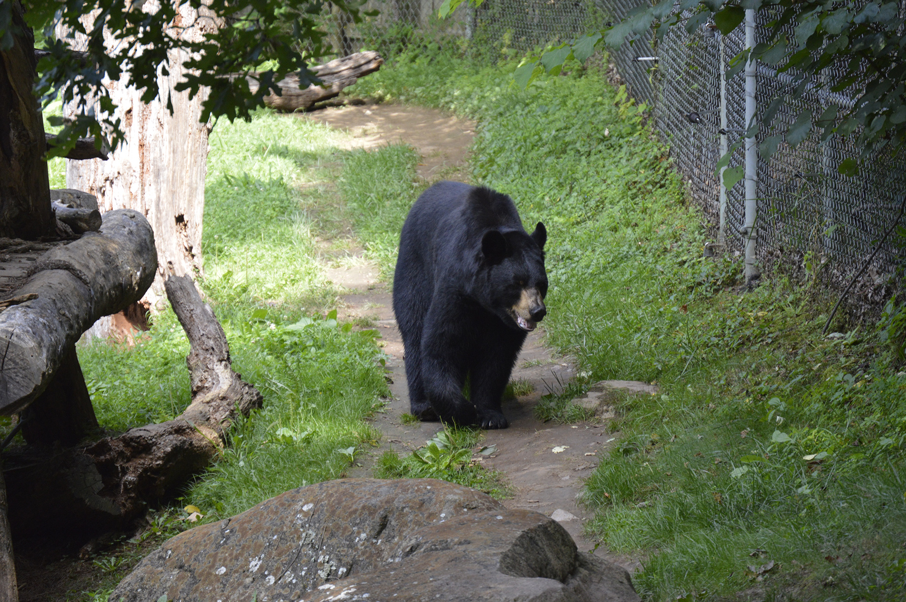 https://wearethe828.com/2021/06/07/brews-and-bears-returns-at-the-wnc-nature-center/